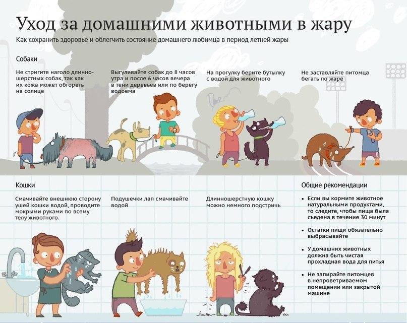 Советы по выбору домашних животных для детей – обзор и описания всех вариантов. питомец для ребенка: правила выбора и советы по уходу лучший преданный друг - собака