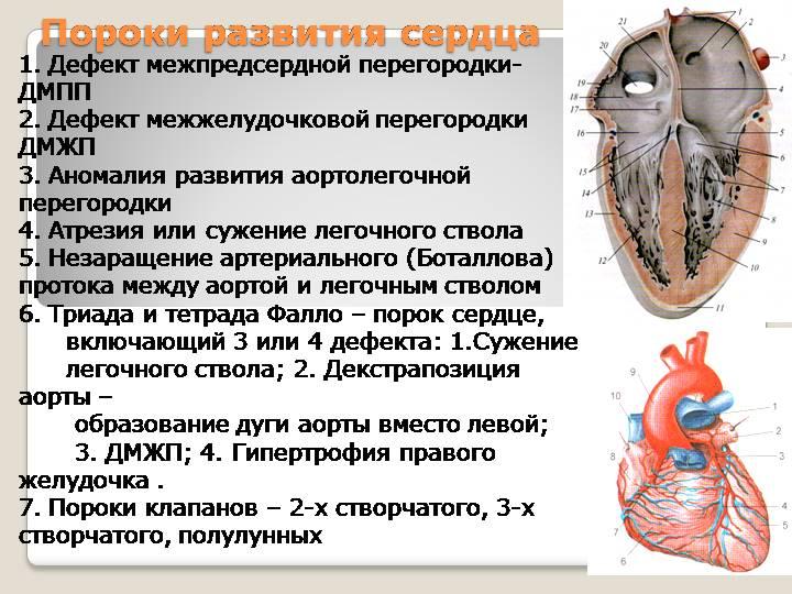 Дефект межпредсердной перегородки (дмпп) у новорожденных детей   osostavekrovi.com