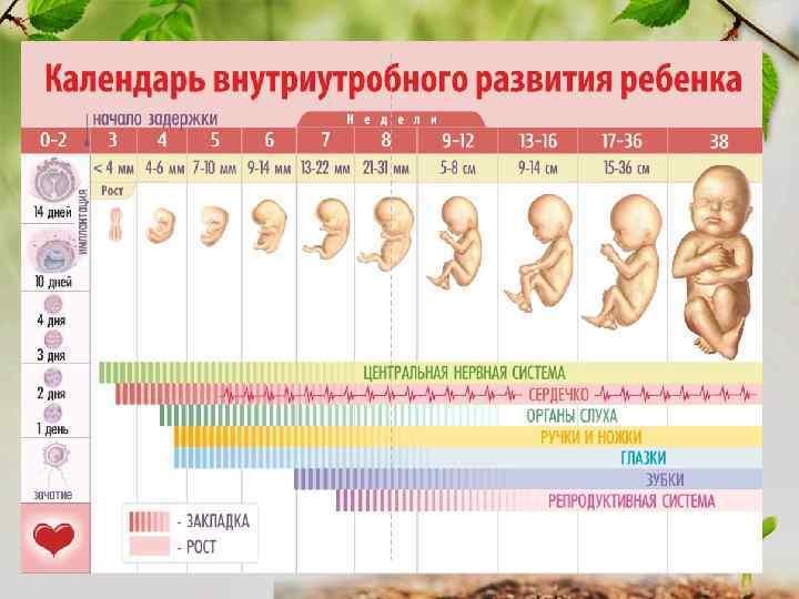 Первый триместр беременности: признаки, угрозы, рекомендации ~ блог о детях