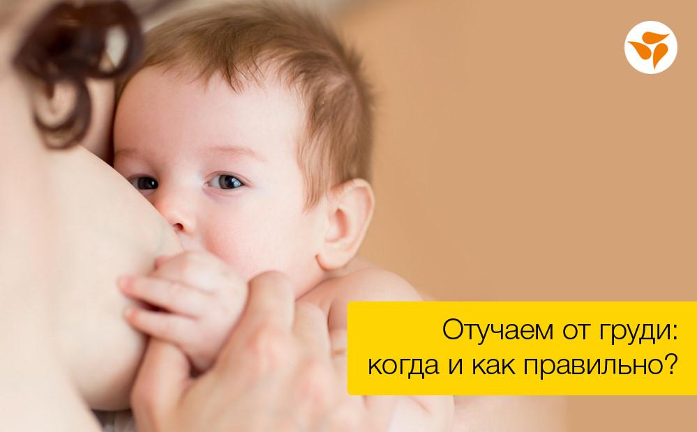Как отлучить ребенка от груди: пошаговая схема и когда лактацию не стоит прекращать
