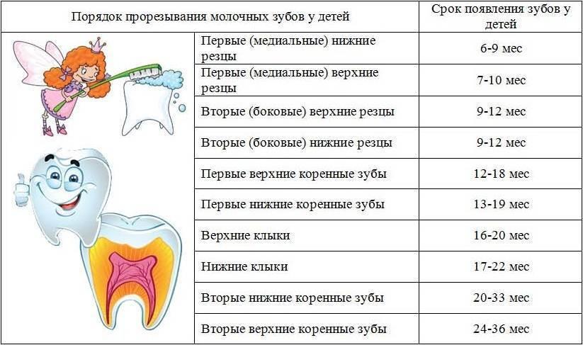 4 мифа о прорезывании зубов у детей