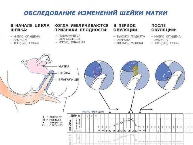 Признаки и особенности имплантации эмбриона