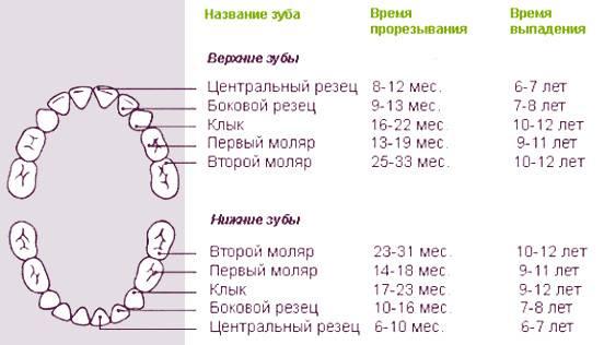 Температура при прорезывании зубов у грудничка: что нужно знать родителям