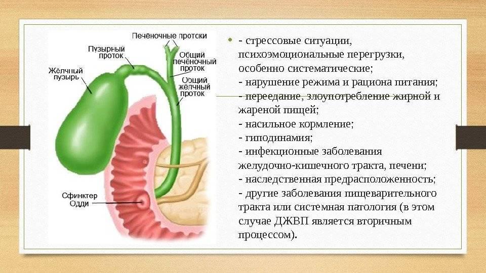 Дискинезия желчевыводящих путей у детей: 4 причины, симптомы, 3 пути лечения