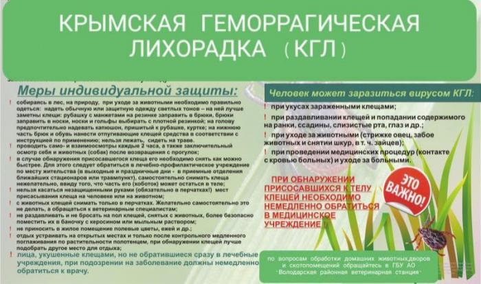 Клинические рекомендации. геморрагическая лихорадка с почечным синдромом у взрослых