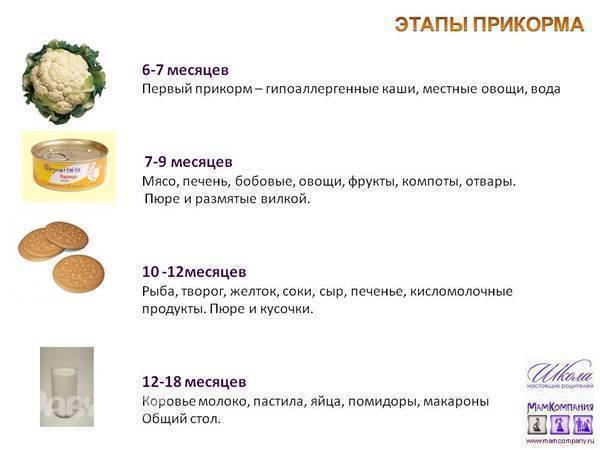 Овощи для первого прикорма   уроки для мам