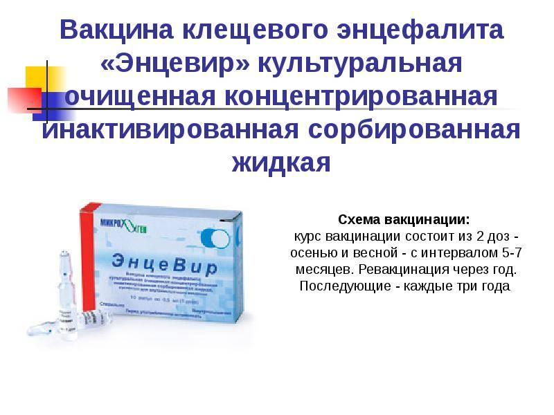 Прививка от клещевого энцефалита, схема вакцинации