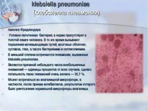 Клебсиелла у грудничка в кале - виды бактерий и влияние палочек на работу кишечника