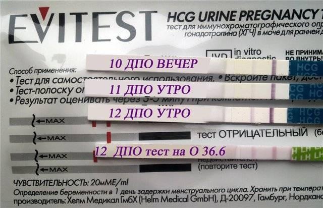 На каком сроке тест на беременность покажет заветные полоски