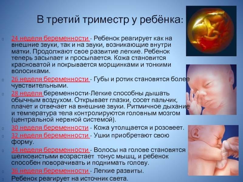 24 неделя беременности: развитие плода, его фото, опасные ощущения, видео