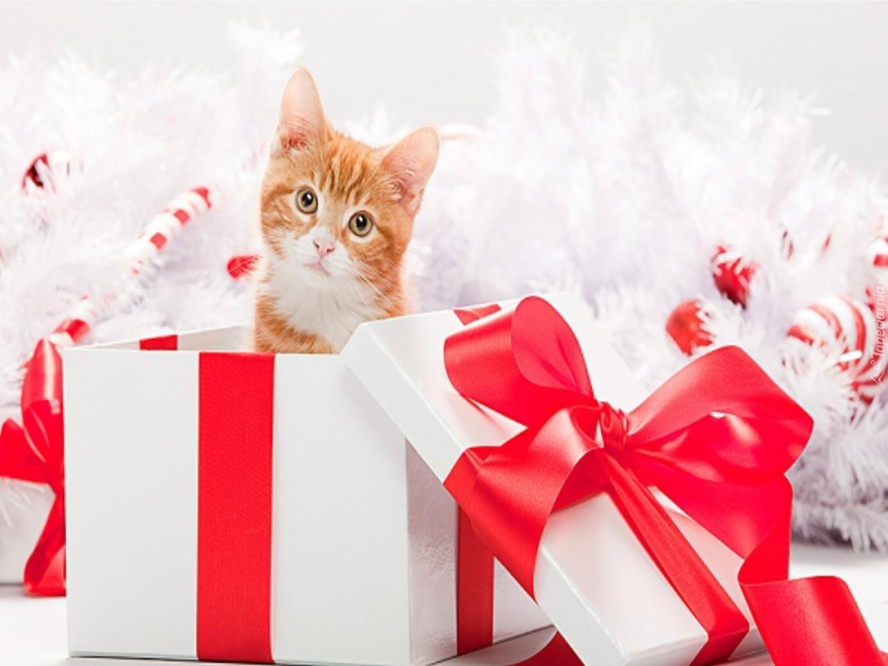 Котенок – подарок не для каждого - ваш врач