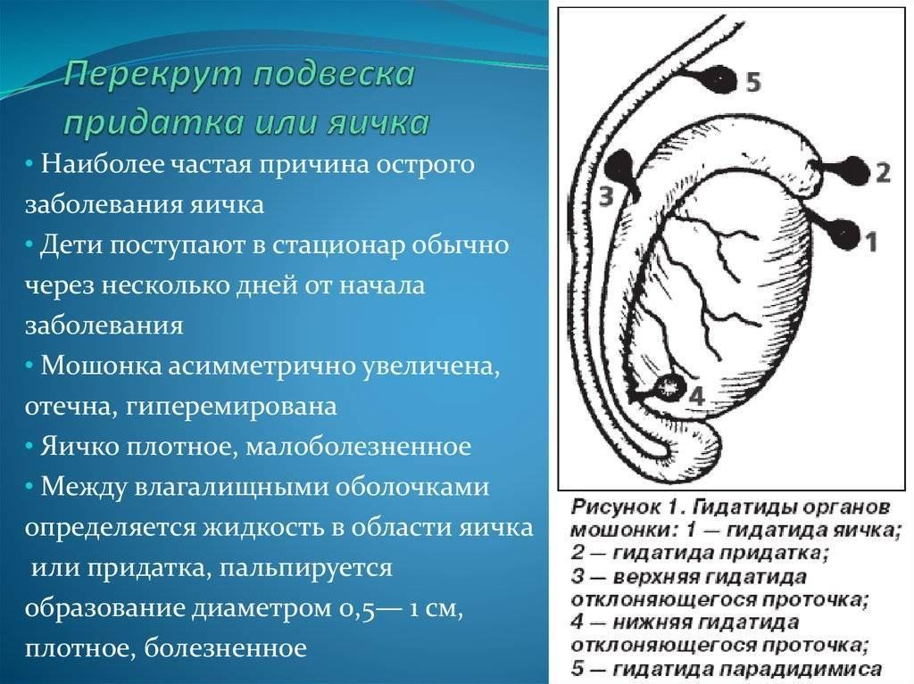 Что делать, если у новорождённого мальчика не опустились яички. причины и последствия