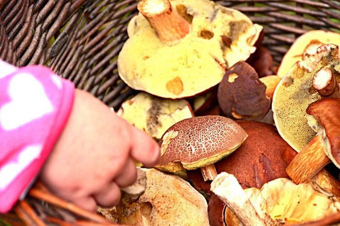 С какого возраста можно грибной суп детям - советы врачей