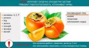 Польза и вред хурмы, правила введения ягоды в прикорм / питание / статьи