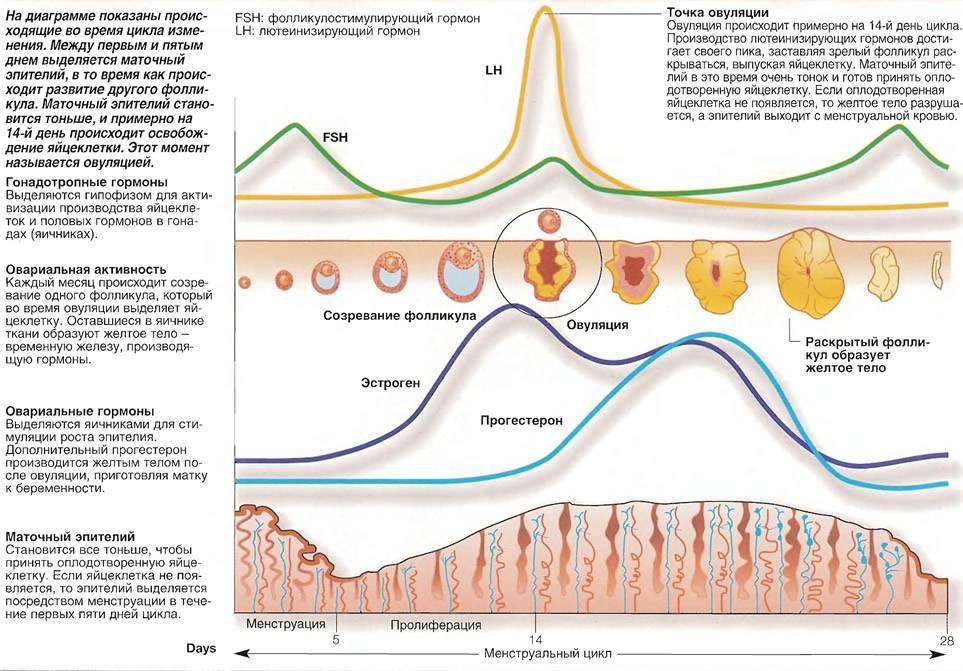 Выделения после овуляции если зачатие произошло.
