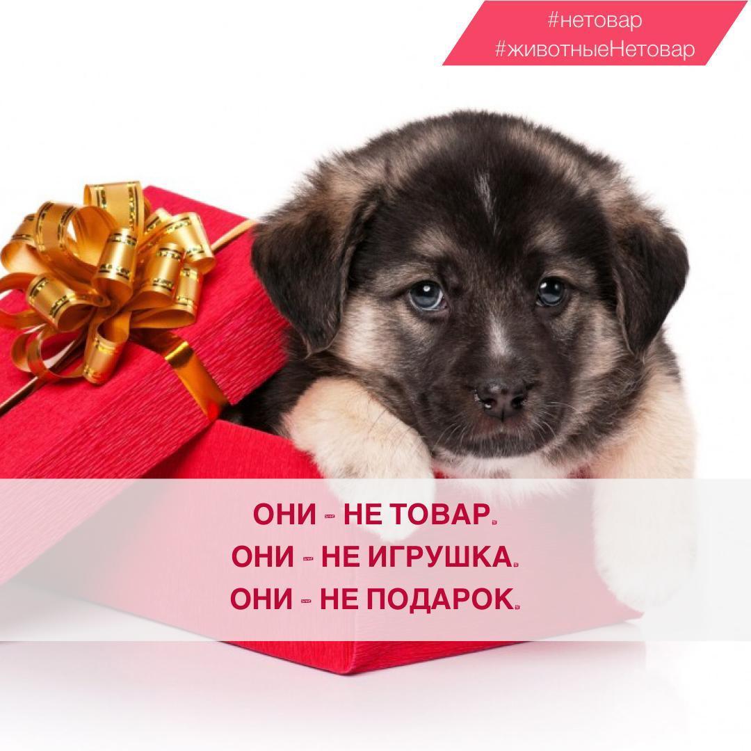 Котенок как подарок к новому году
