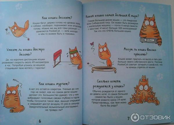Почему и как кошки мурлыкают: разбираемся в привычном для кошек «деле»