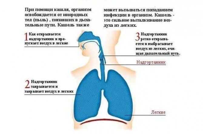 Лающий кашель у ребенка без температуры – чем лечить