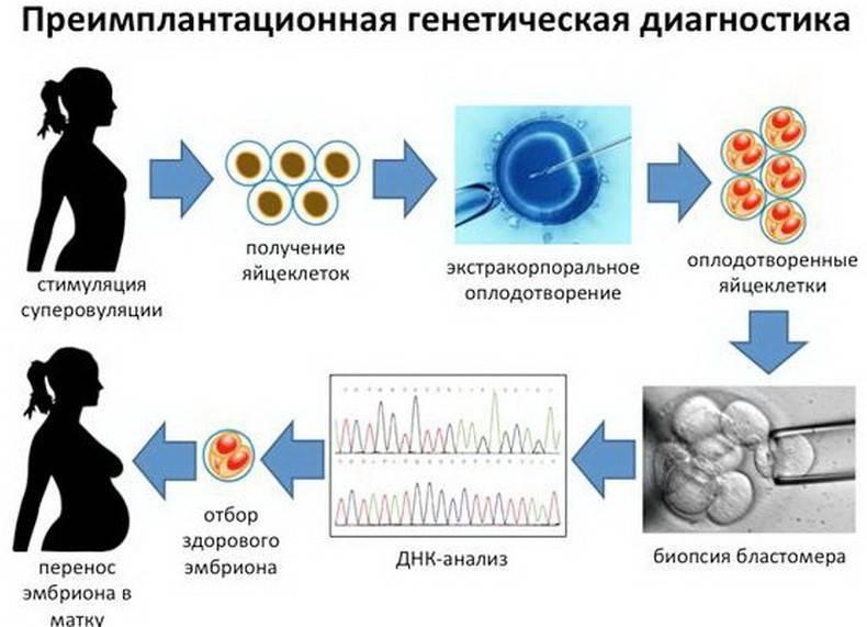 Преимплантационное генетическое тестирование (пгт), генетический анализ эмбрионов в москве