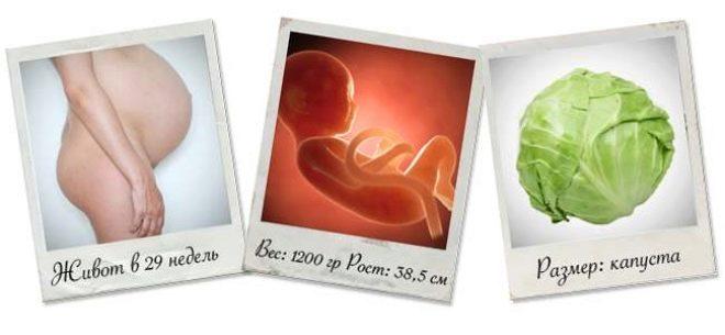 29 недель беременности: что происходит с малышом и мамой?