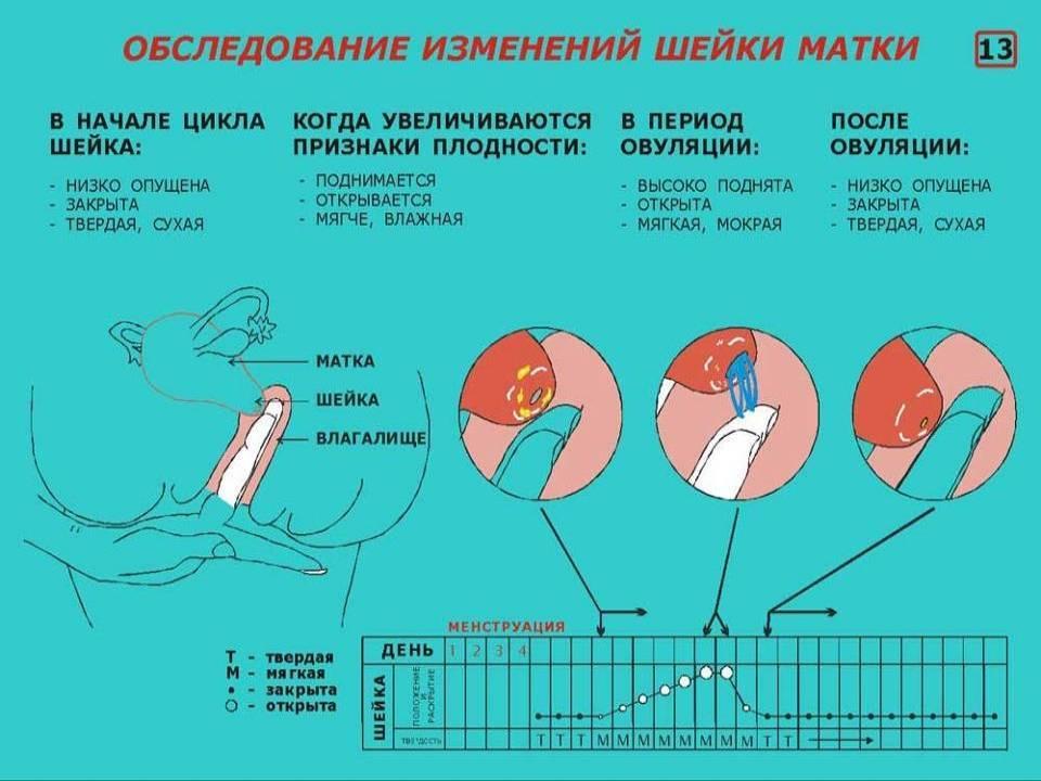 Короткая шейка матки при беременности: причины патологии. что делают, когда короткая шейка матки у беременной - автор екатерина данилова - журнал женское мнение