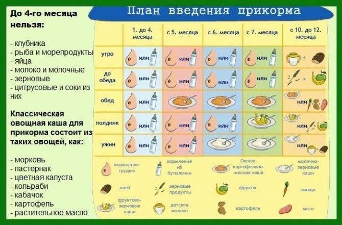 Схема введения прикорма при грудном вскармливании