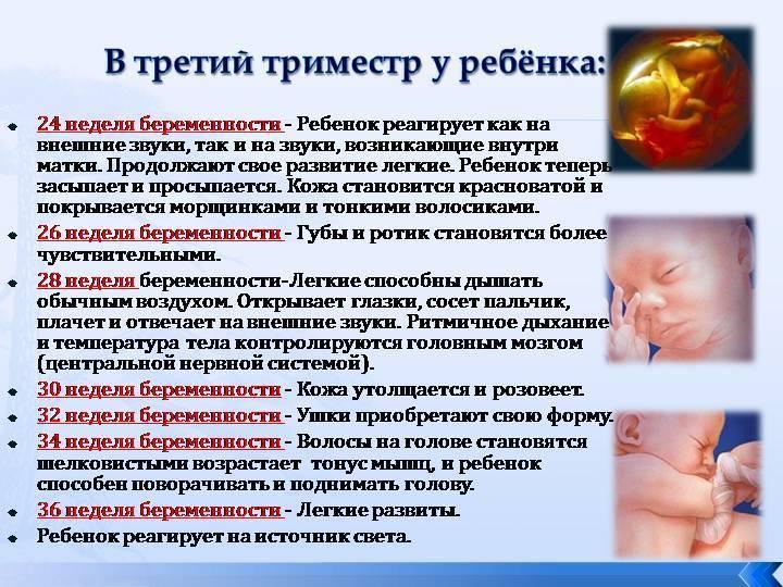 24 неделя беременности – развитие плода, плод на 24 неделе беременности. как выглядит ребенок на 24 неделе беременности?