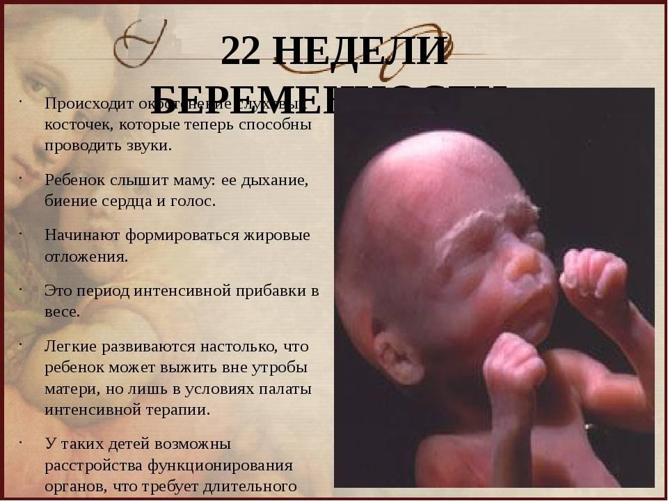 22 неделя беременности: размер плода и шевеления. что происходит с плодом на 22-й неделе беременности? :: syl.ru