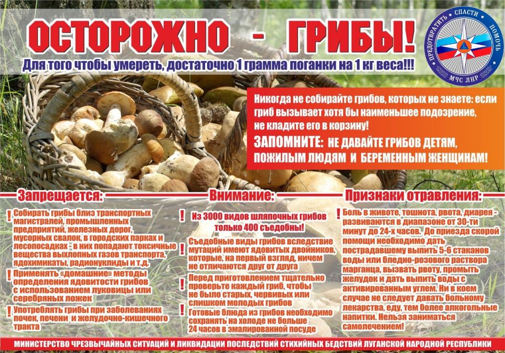 Отравление грибами: симптомы и лечение
