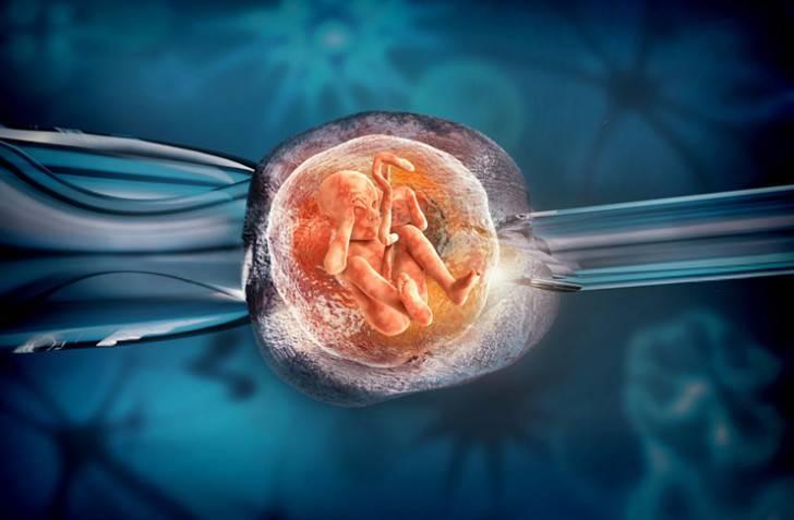 На какой день после эко прикрепляется эмбрион к матке: признаки и симптомы прикрепления