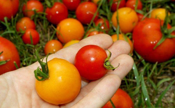 Можно ли помидоры при грудном вскармливании кормящей маме новорожденного?