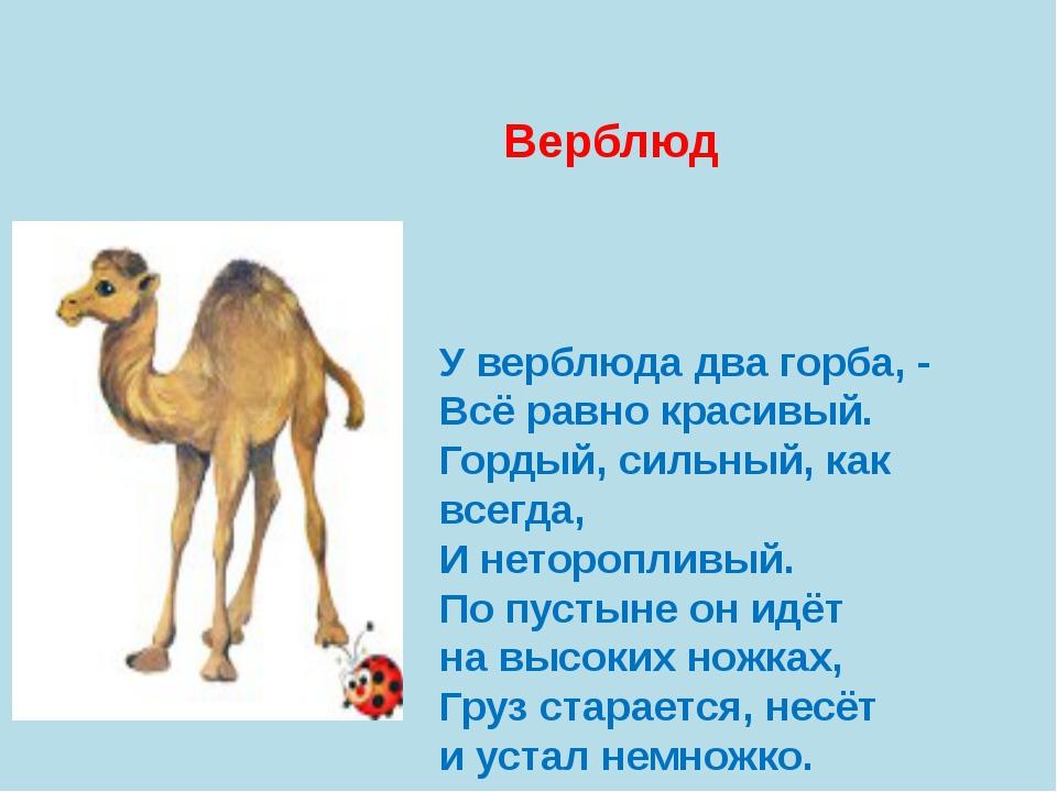 Зачем верблюдам горбы. как объяснить ребенку 3-5 лет зачем верблюду горбы | интересные факты