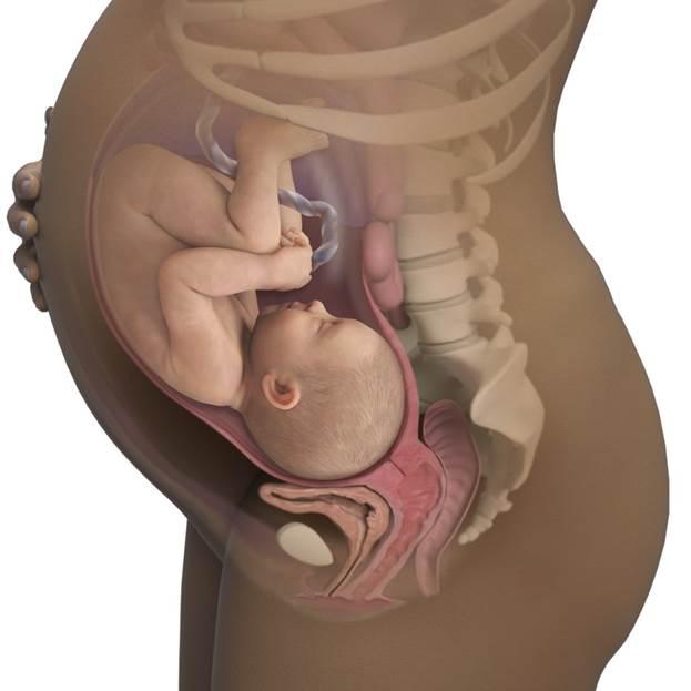33 неделя беременности: что происходит с плодом и что чувствует женщина. развитие плода рост и вес