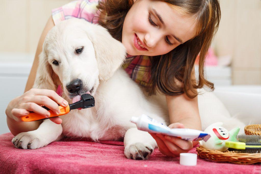 Домашние животные для детей (37 фото): какого питомца завести в квартире и частном доме? польза и вред для малышей