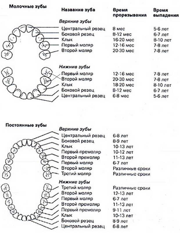 5 лучших лекарств при прорезывании зубов у детей