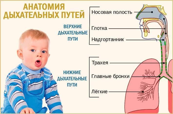 Причины кашля во сне у ребенка, как оказать первую помощь во время приступа