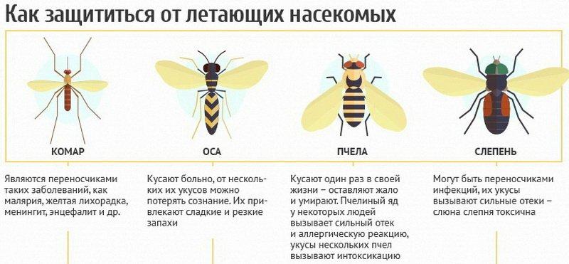 Первая помощь ребенку при укусах насекомых (пчелы, осы, комары, мошки)