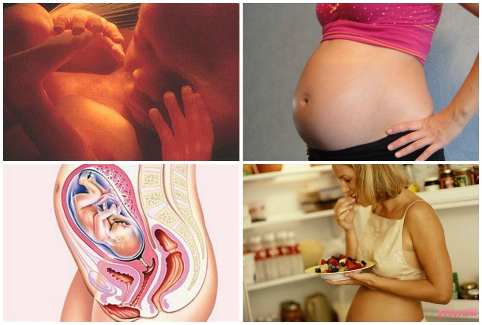 22 неделя беременности: развитие плода вес и рост. что происходит с мамой и малышом