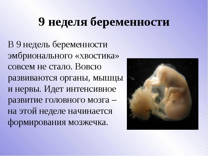 9 неделя беременности