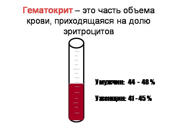Пониженный гематокрит в крови при беременности: что означает, норма
