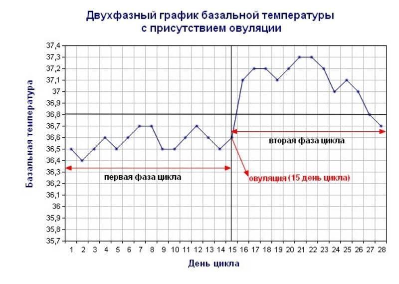 Базальная температура перед месячными: какая должна быть, что показывает, норма и отклонения, график