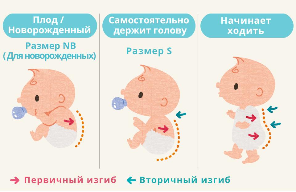Во сколько месяцев дети начинают держать голову? - mama.ru
