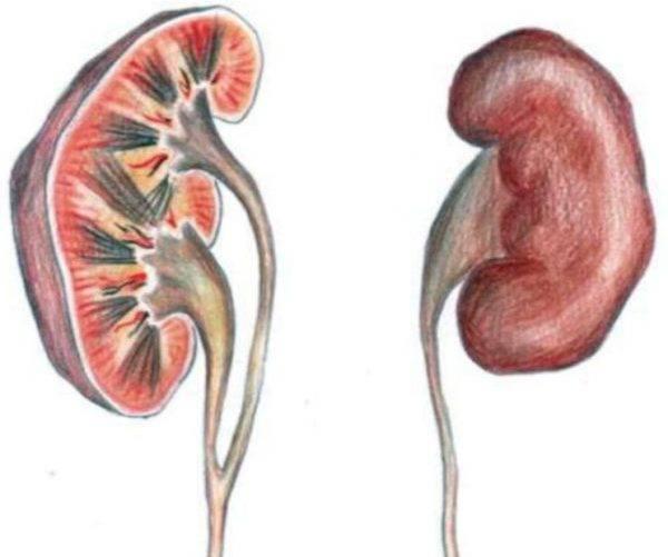 Что такое пиелоэктазия почек у грудничка