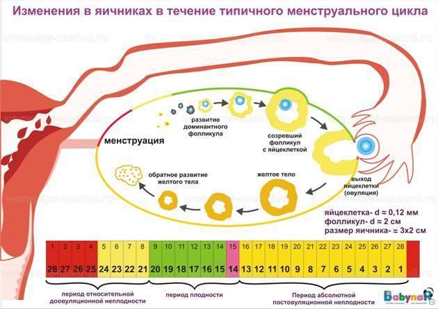 Почему происходит сбой менструационного цикла: типы нарушений при месячных и их причины, способы лечения