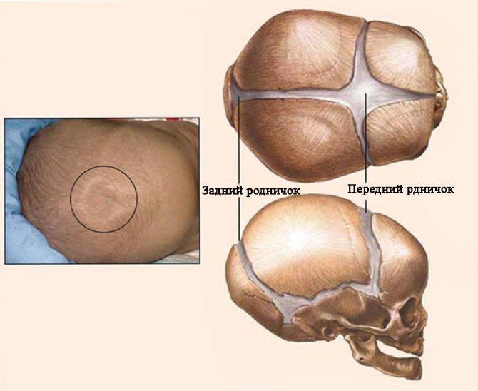 Родничок у новорожденных: когда зарастает, размеры в норме, что делать, если родничок у грудничка пульсирует
