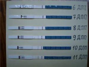 Криопротокол 5 дневных эмбрионов и трехдневок, криозаморозка эмбрионов, подготовка, криоперенос при эко, как вести себя после переноса, ощущения