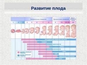Первые признаки и симптомы, которые могут возникнуть на 1 неделе беременности