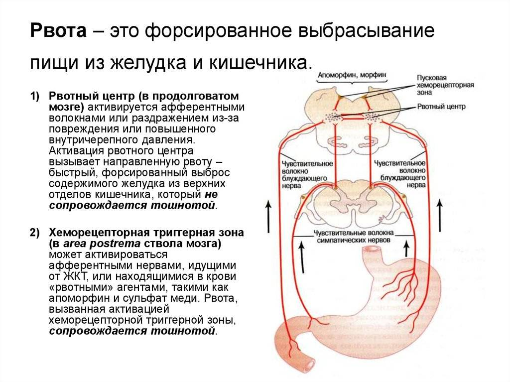 У ребенка встал желудок и его рвет: что делать, как помочь малышу отравление.ру у ребенка встал желудок и его рвет: что делать, как помочь малышу