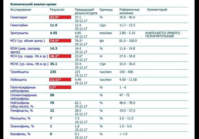 Сегментоядерные нейтрофилы повышен: у ребенка и взрослого, причины
