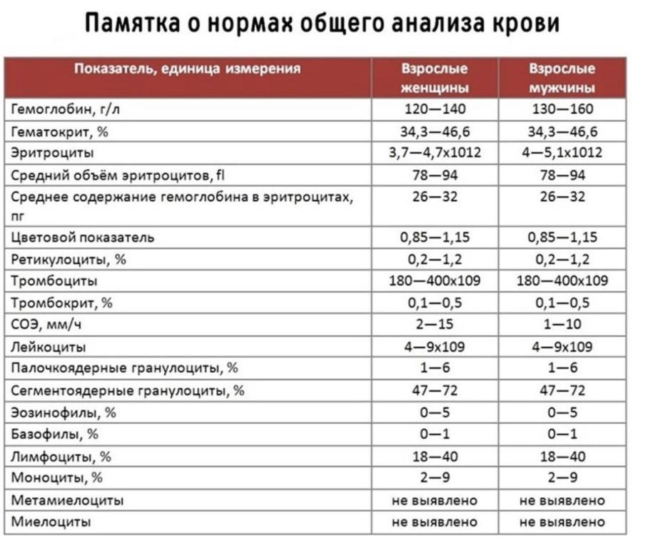 Plt в анализе крови: что это такое, норма, расшифровка, отклонения
